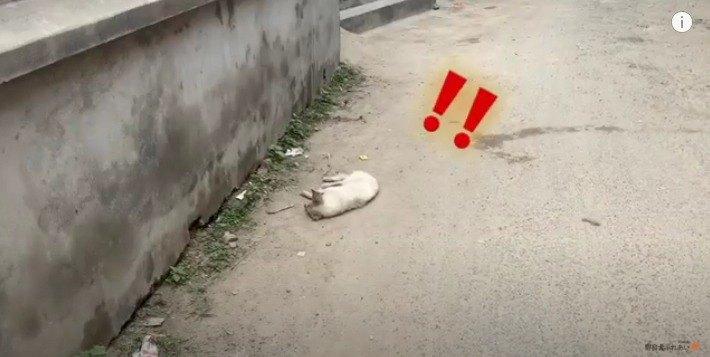 寝ている野良犬