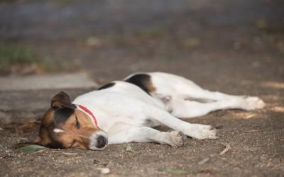 道に横たわる犬