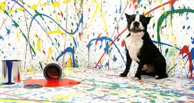 色とりどりのペンキと嬉しそうに座る犬