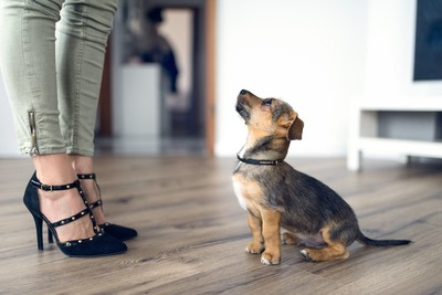 飼い主の指示でおすわりをしている子犬