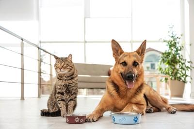 ボウルを前にした猫とシェパード
