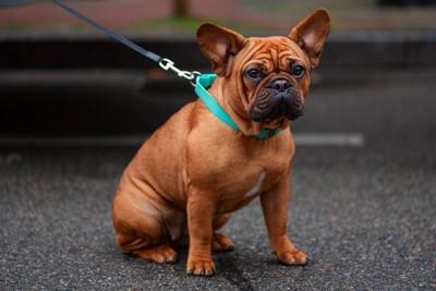 道路で座り込む犬