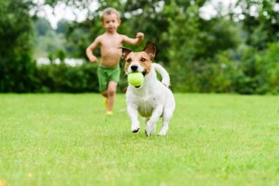 ボールを持って走るジャックラッセルと男の子