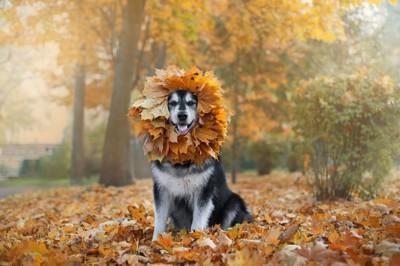 顔に落ち葉で作った輪をつけた犬