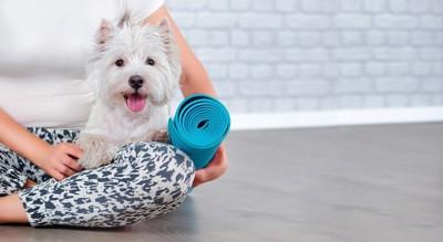 青いヨガマットを持つ女性の膝の上の白い犬