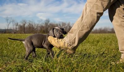 靴を噛む犬