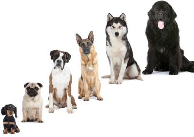 6匹の犬が大きい順番に並んでいる