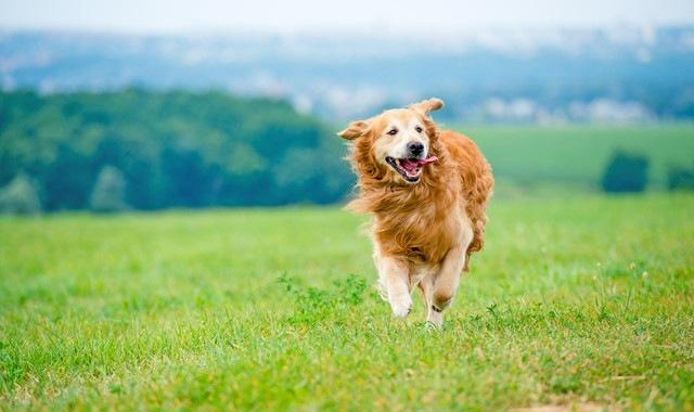 気持ちよさそうに走る犬