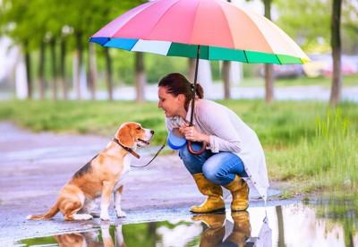 傘の下の犬と飼い主