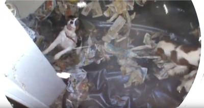 地下バンカーに閉じ込められた犬