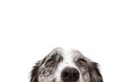 頭を出して覗き込んでいる犬