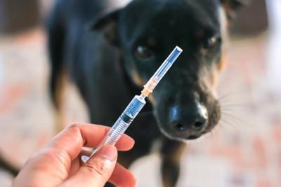 黒い犬と注射器を持つ人の手