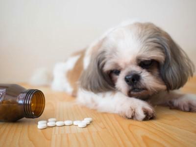 瓶からこぼれた薬を見る犬
