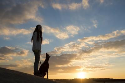夕日を眺めている飼い主と犬