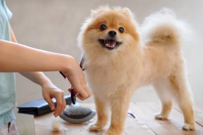 台の上でトリミングされている犬