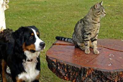 dogcat8