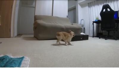 ソファの真ん中で走ってる犬