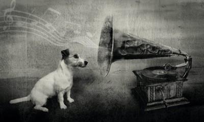 蓄音機に耳を傾ける犬