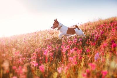 赤い花の間をジャンプする犬