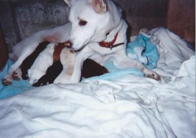 母犬と授乳