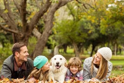 落ち葉の上に寝転がる家族と犬