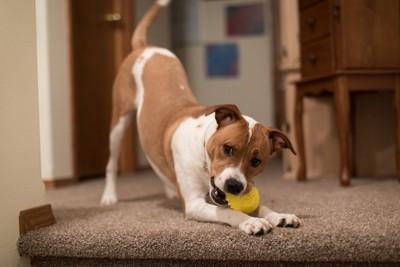 遊んでもらう犬