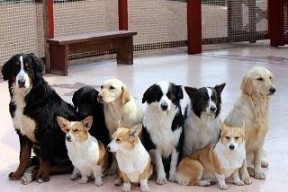 沢山の犬が並んでいる写真