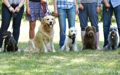訓練中の飼い主と犬たち