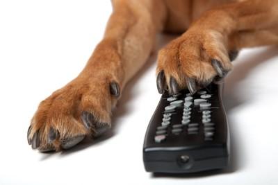 リモコンに手を乗せる犬の手