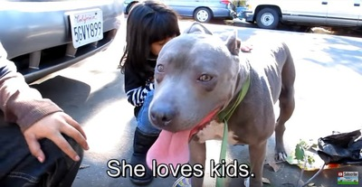 子どもが犬の背中をなでる