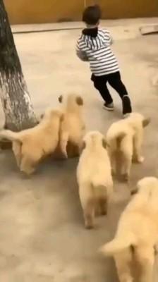子犬たちに追いかけられる男の子