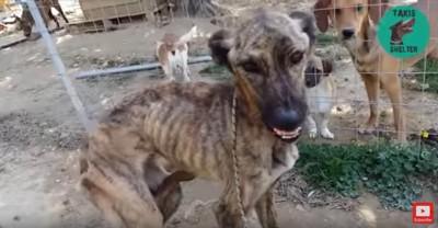 施設の犬たちの前で牙を見せる犬