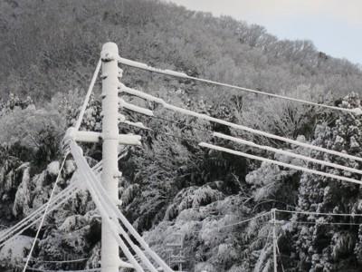 雪景色 電線や木に雪が積もった様子