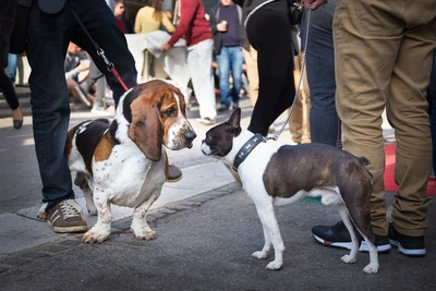 人混みで挨拶する犬