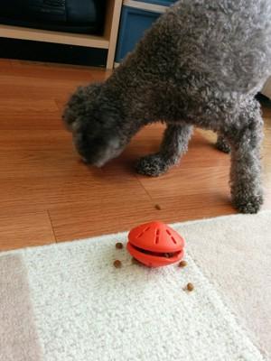 知育玩具でフードを食べる犬
