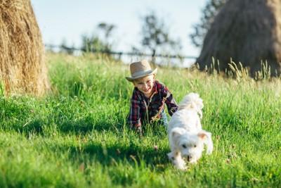 少年から逃げる白い犬