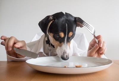 食べる犬の写真