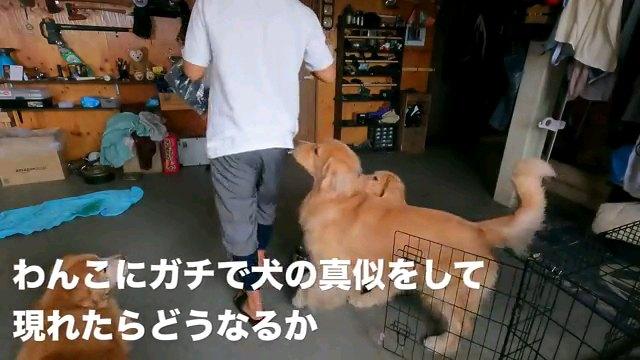 わんこに~字幕