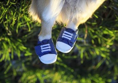 靴を履いた犬の足元のアップ