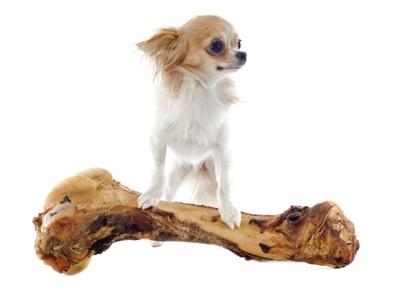 納豆で骨太になった犬のイメージ