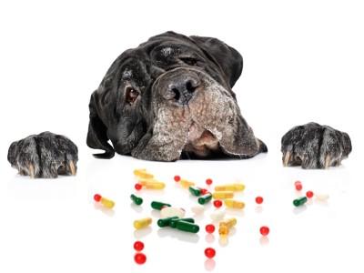 さまざまな薬を覗き込む黒い犬