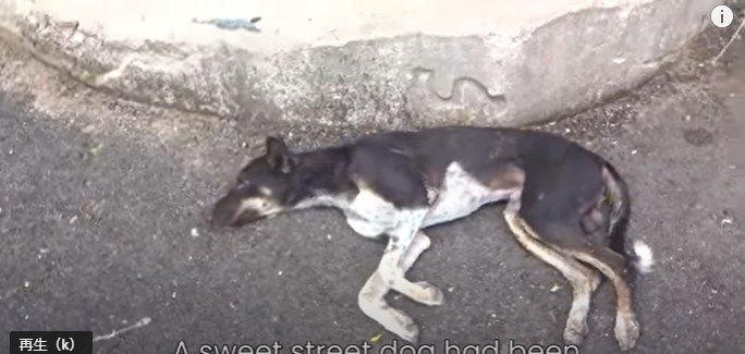 負傷した犬