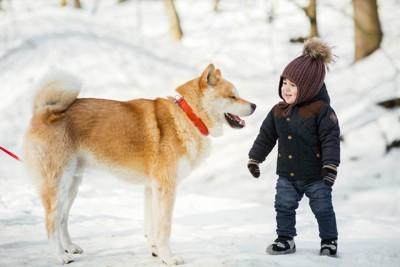 雪の中、秋田犬と子供