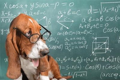 黒板と眼鏡をかけた犬