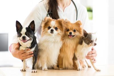 四匹の小型犬を抱き寄せる動物看護士