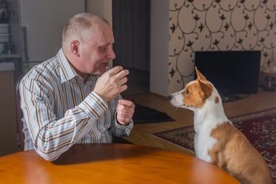 食卓に座ってバセンジーに話しかける男性