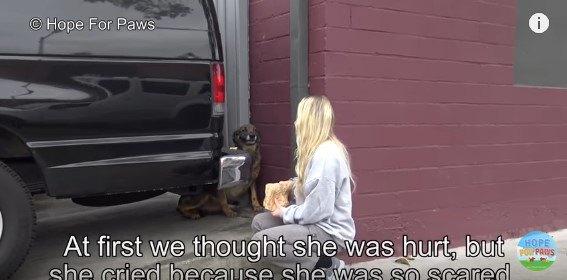 目の前の人に警戒する犬