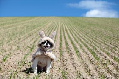 畑にいる犬