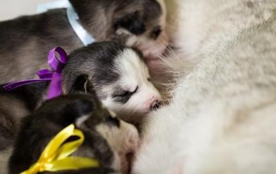 母乳を飲む子犬