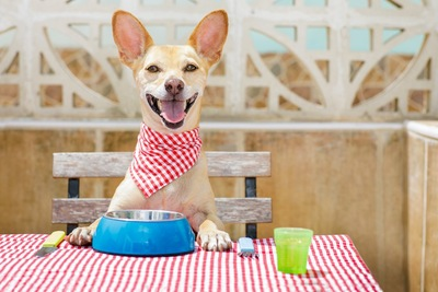 食卓に座って食事を待つ犬